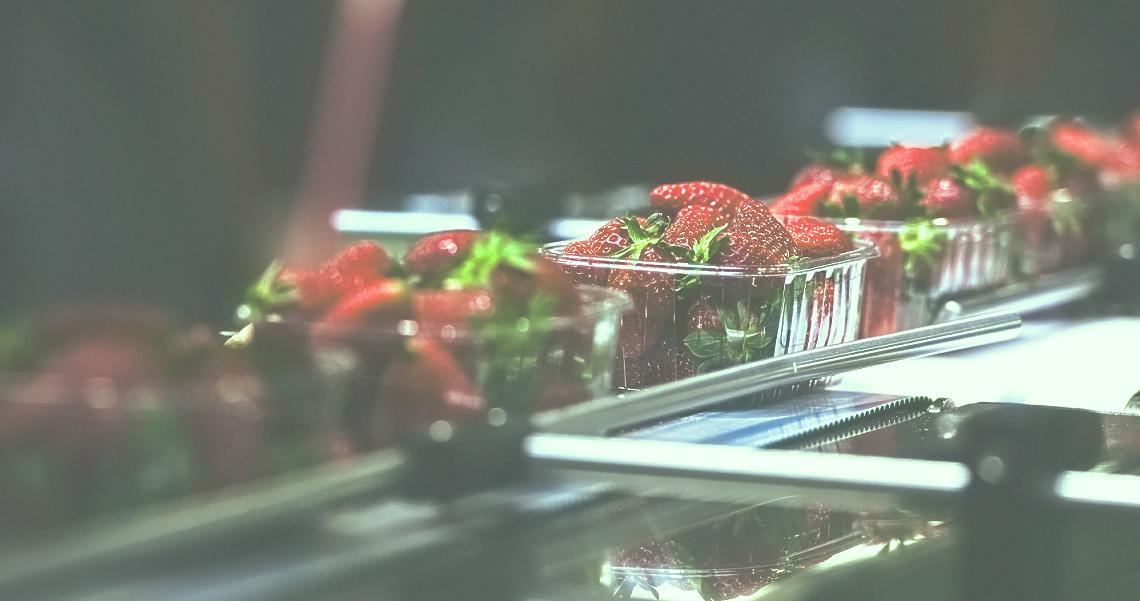 Strawberries on conveyor belt on packing line